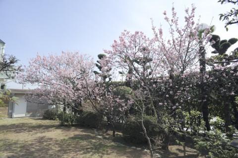 DSC_0326小松邸2