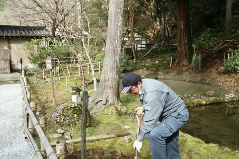 室生寺 稚児桜
