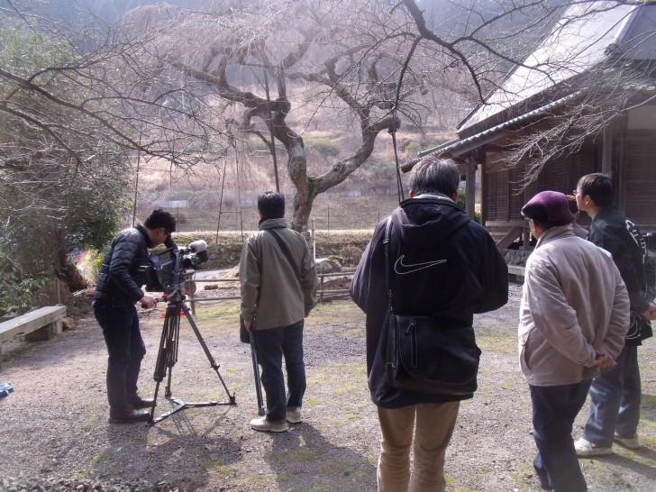 奈良テレビ 西光寺 枝垂桜