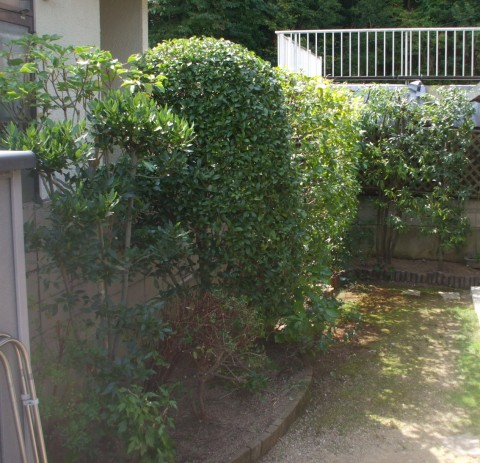 植木屋 剪定 庭