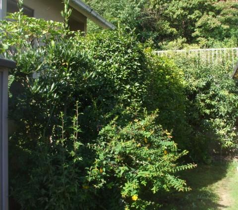植木 葉刈り
