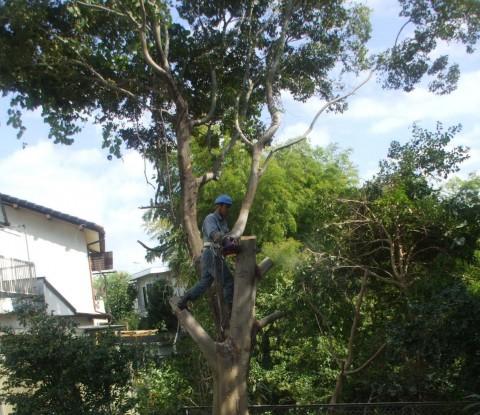 樹木 伐採