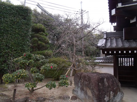 黒松の植栽
