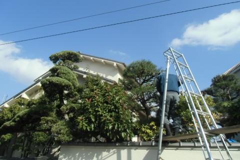 植木 大阪