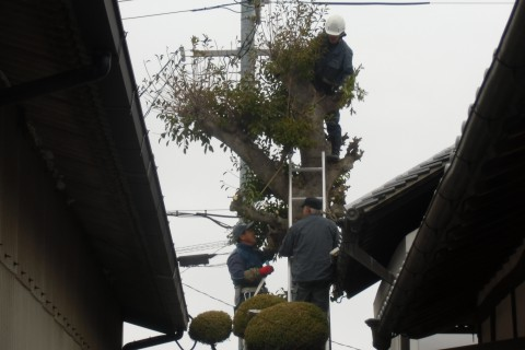 剪定 堺 庭