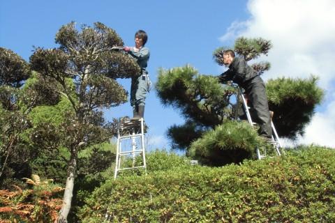 葉刈 植木