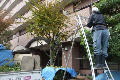 マンション 植木管理 大阪