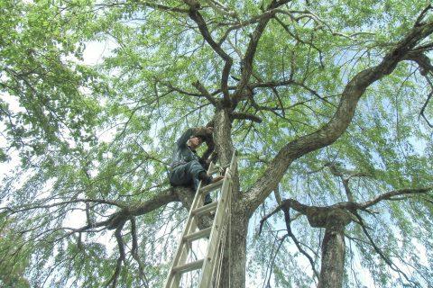 樹木医による治療